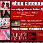 shoe-kittens
